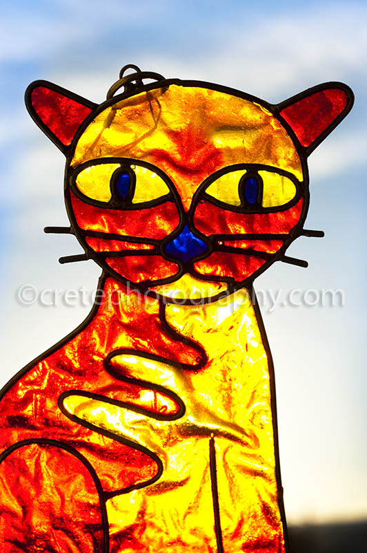 Stained cat